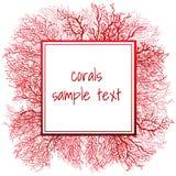 红珊瑚和框架纹理的文本 库存图片