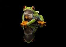 红眼睛的雨蛙与反射 免版税库存图片