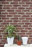 红砖墙壁背景用仙人掌 免版税库存图片