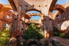 红砖教会长得太大的废墟  免版税库存图片