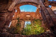 红砖教会长得太大的废墟  库存图片