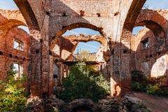 红砖教会长得太大的废墟  库存照片
