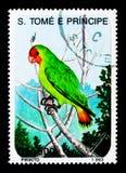红脸爱情鸟(Agapornis pullaria),鸟serie,大约1993年 免版税图库摄影