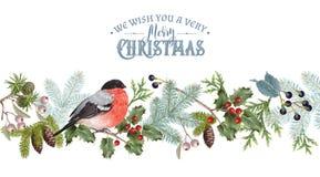 红腹灰雀圣诞节边界 库存例证