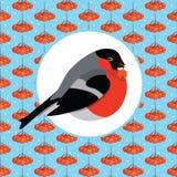 红腹灰雀用花楸浆果 免版税库存照片