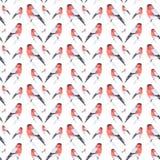 红腹灰雀鸟的水彩例证坐在白色背景隔绝的枝杈 E 库存例证