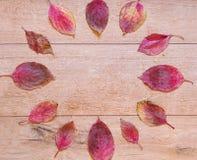 红色下落的叶子和雨下落秋天时钟  免版税库存照片