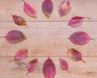 红色下落的叶子秋天时钟  库存图片