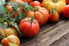 红色五颜六色的蕃茄-,黄色,橙色 收获菜烹调构想 库存照片