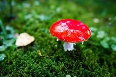 红色伞菌蘑菇 库存照片