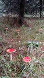 红色伞菌 库存照片