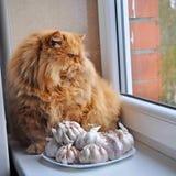 红色修饰猫在窗口旁边坐在大蒜旁边 图库摄影