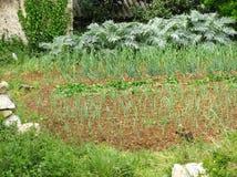 红色克罗地亚地球上的一个菜园 免版税库存图片