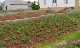 红色克罗地亚地球上的一个菜园 库存图片