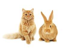 红色兔子和猫 免版税库存图片
