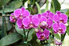 洋红色兰花花束在颜色背景的 库存照片