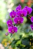 洋红色兰花花束在颜色背景的 免版税库存图片
