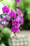 洋红色兰花花束在颜色背景的 免版税库存照片