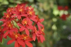 红色兰花花束 库存照片