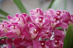 紫红色兰花 库存照片