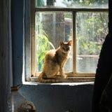 红色农厂猫在一个老窗口前面坐一个晴朗的下午 库存图片