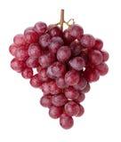 红色分行新鲜的葡萄 免版税库存图片