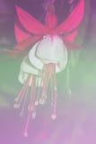 红色剧烈的花 库存图片