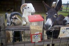 红色动物园分配器拿着饥饿的动物的50分饲料 库存照片