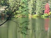 红色反映结构树 免版税库存照片