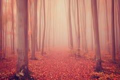 红色口气的秋天有雾的神秘的森林,自然背景 库存图片