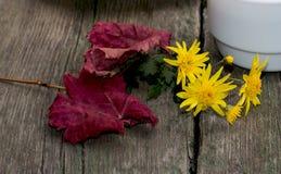 红色叶子、黄色花和杯子在一张木桌,静物画上 免版税库存照片