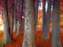 红色叶子在森林,死的自然里 库存图片