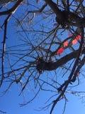 红色叶子在秋天 免版税库存照片