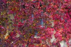 红色叶子背景  库存照片