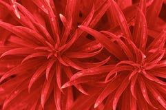 红色叶子背景 免版税库存照片