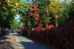 红色叶子街道 免版税库存图片