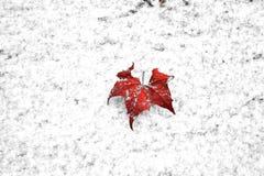 红色叶子 库存图片