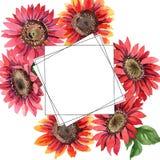 红色向日葵 花卉植物的花 框架边界装饰品正方形 免版税库存图片