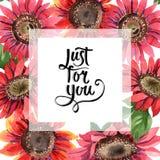 红色向日葵 花卉植物的花 框架边界装饰品正方形 免版税图库摄影