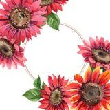 红色向日葵 花卉植物的花 框架边界装饰品正方形 免版税库存照片