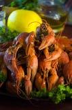 红色和开胃煮沸的小龙虾 免版税图库摄影