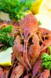 红色和开胃煮沸的小龙虾 免版税库存图片
