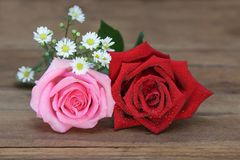 红色和桃红色玫瑰用水在木背景滴下 库存照片