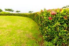 红色和桃红色花卉生长作为在绿草加尔省附近的墙壁 免版税库存照片