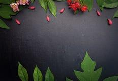 红色和桃红色花有黑背景 免版税图库摄影