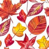 红色和橙色秋叶背景 水彩无缝的样式例证 免版税图库摄影