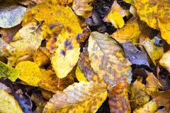 红色和橙色秋叶背景 库存照片