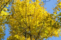 红色和橙色秋叶背景 免版税库存照片
