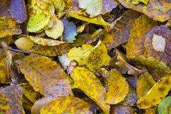 红色和橙色秋叶背景 库存图片