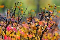 红色和橙色秋叶 免版税库存图片